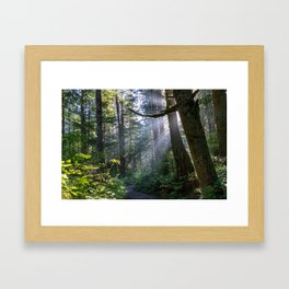 Rain Forest at La Push Framed Art Print