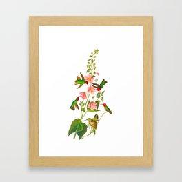 Columbian Hummingbird Framed Art Print