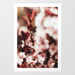 Red Leaf Blossom Art Print