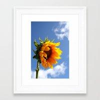 sunflower Framed Art Prints featuring sunflower by Hannah