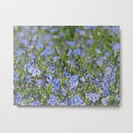 Little Blue Flowers Metal Print