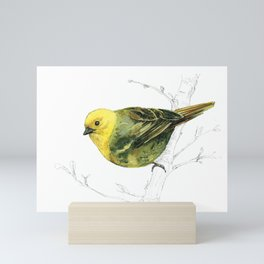 Mr Mohua , yellowhead New Zealand native bird Mini Art Print