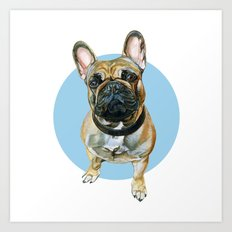 French Bulldog blue spot. Art Print