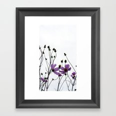 Mexican Aster 2 Framed Art Print