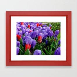 Keukenhof Flowers Framed Art Print