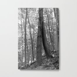 Old love, black and white photography trees Metal Print