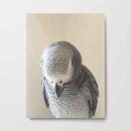 Portrait of Bo African Grey Parrot Metal Print