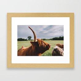 Majestic Highland Cow II Framed Art Print
