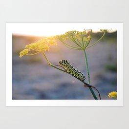 Caterpillar Sunset  Art Print