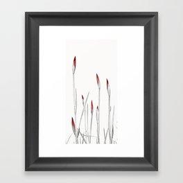Red and White Spring Framed Art Print
