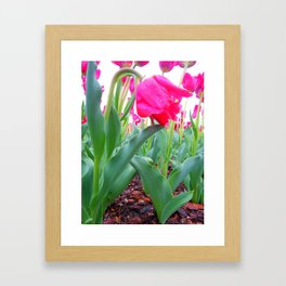Hang Low Framed Art Print