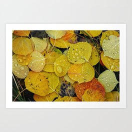 Water droplets on autumn aspen leaves Art Print