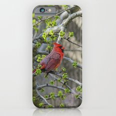 His Majesty the Cardinal iPhone 6s Slim Case