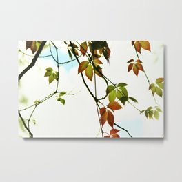 Creeper in autumn colors Metal Print