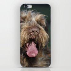 Brown Roan Italian Spinone Dog Head Shot iPhone & iPod Skin