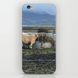 Cows Lunch Kerry Ireland iPhone Skin