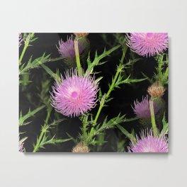 Thistle Beauty - Seamless Metal Print