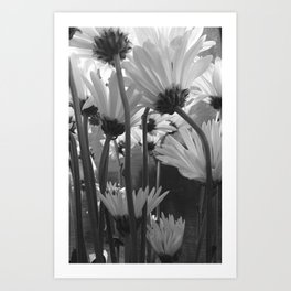 Looking Up - Daisey Art Print