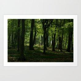 SHADOW FOREST Art Print
