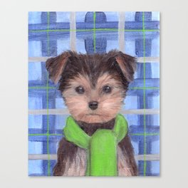 Yorkie Poo in Scarf Canvas Print