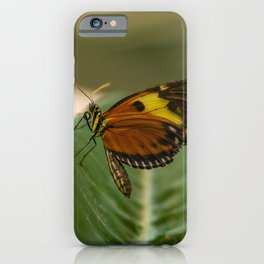 Perched Tiger Longwing Butterfly iPhone Case
