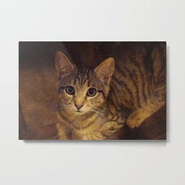 Tybalt the Prince of Cats Metal Print