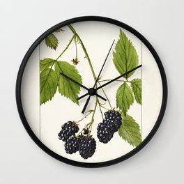 Blackberries (Rubus subg Rubus Watson) (1904) by Deborah Griscom Passmore Wall Clock