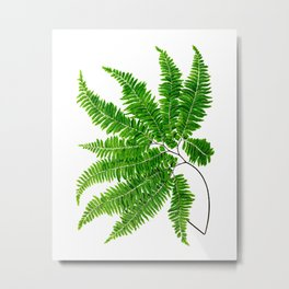 Antique Fern Print No.5 Green Nature Botanical Art Metal Print