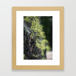 Growing and reaching for more Framed Art Print