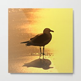 Seagull in Silhouette on Beach in Sunset Light Metal Print