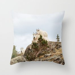 Three Ami-Goats // Scenic Hike Animals Photograph Colorado Wildlife National Park Mountain Goats Throw Pillow