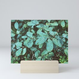 Blue Leaves In Rain Mini Art Print