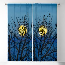 Night Birds Blackout Curtain