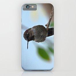 Juvenile Male Anna's Hummingbird iPhone Case
