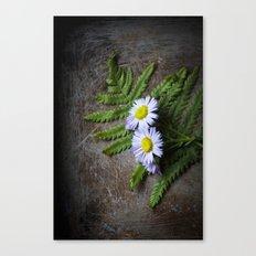 Woodland Aster  Canvas Print