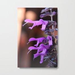 Spring - Purple flower Metal Print
