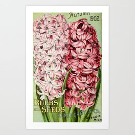D.M. Ferry Bulbs & Seed Catalogue 1902 - Hyacinths Art Print