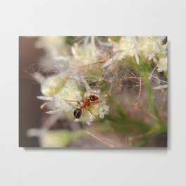 Meet My Ant Metal Print