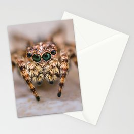 Orange-Brown Jumping Spider Macro Photograph Stationery Cards