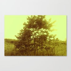 beauty of nature 3 Canvas Print