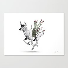 Pronghorn Canvas Print