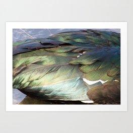 Free Feathers Art Print