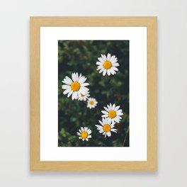 Daze-y Daisies Framed Art Print