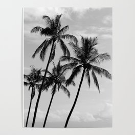 Palm Trees Hawaii Poster