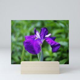 Purple Iris Mini Art Print
