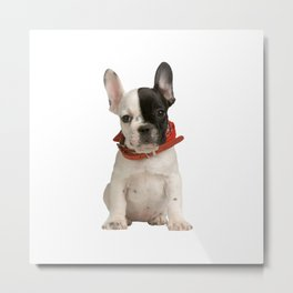 Boston Terrier Puppy Metal Print