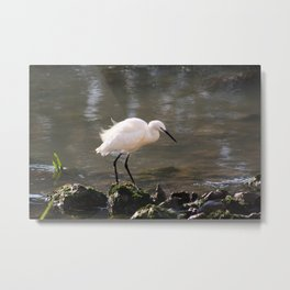white heron bird by the river Metal Print