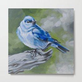 Mountain Bluebird Metal Print