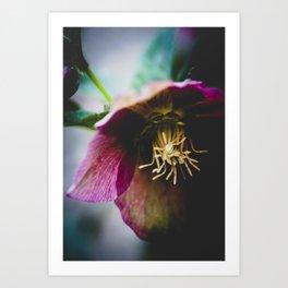 A winter flower Art Print