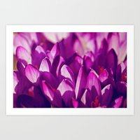 Purple Spring Beauties Art Print